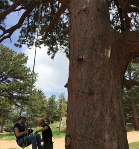 Allen's Park Climb